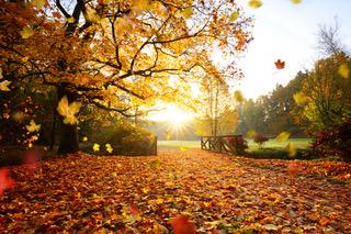 Sunrise on a pretty autumn landscape